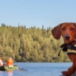 Gone Dogfishing during the Dog Days of Summer: MANCANDY